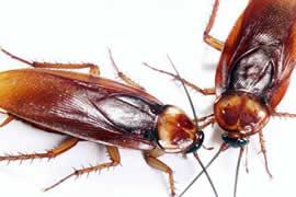 pest control of cockroaches