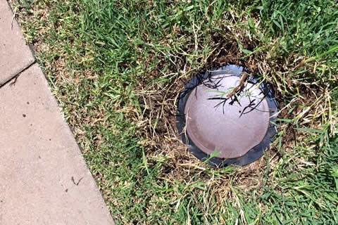 Termite Trap