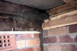 Termites Under The House